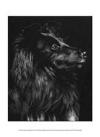 Canine Scratchboard VI Fine Art Print