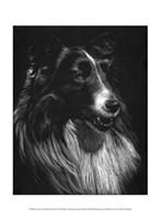 Canine Scratchboard VII Fine Art Print