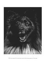 Canine Scratchboard IX Fine Art Print