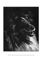 Canine Scratchboard XI Fine Art Print