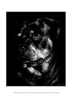 Canine Scratchboard XII Fine Art Print