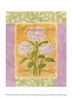 Sweet Hydrangea Fine Art Print
