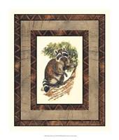 Rustic Raccoon Fine Art Print
