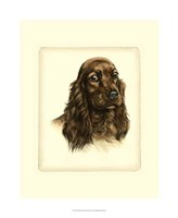 Red Cocker Spaniel Fine Art Print