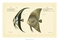 Antique Fish IV Fine Art Print