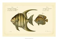 Antique Fish VI Fine Art Print