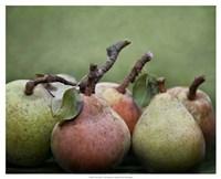 Comice Pears I Framed Print