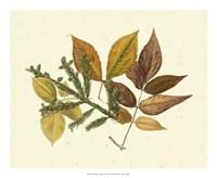 Elm, Spruce, Beech & Ash Fine Art Print