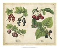 Kitchen Fruits III Framed Print