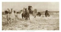 Horses Bathing Fine Art Print