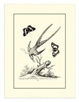 B&W Longtailed Hummingbird  (1742) Fine Art Print