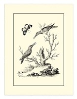 B&W The Hummingbirds (1742) Fine Art Print