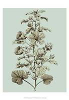 Small Imperial Munting I Fine Art Print