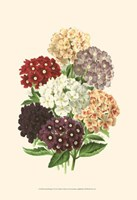Bountiful Bouquet I Fine Art Print