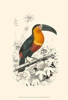 Birds of Costa Rica I Fine Art Print