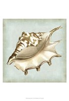 Sea Dream Shells IV Fine Art Print