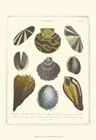 Conchology Collection I Fine Art Print