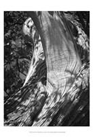 Texture Fine Art Print