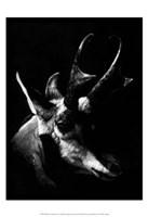 Wildlife Scratchboards II Fine Art Print