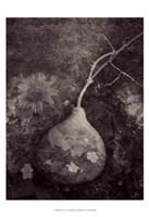 Gourd IV Fine Art Print