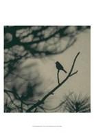 Caligraphy Bird I Fine Art Print