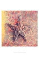 Seashell-Starfish Fine Art Print