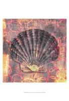 Seashell-Scallop Fine Art Print