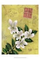 Postage VI Fine Art Print