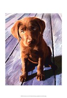 Chocolate Lab Gus Fine Art Print