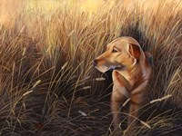 Golden Grass Fine Art Print