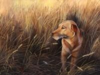 Golden Grass Fine Art Print