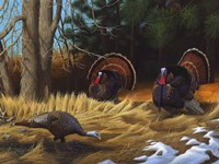 Turkies Fine Art Print