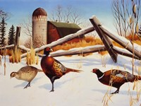 Pheasants II Fine Art Print