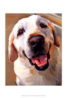 Yellow Dog Smile Fine Art Print