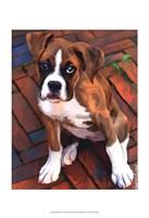 Baby Boxer Fine Art Print