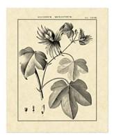 Vintage Botanical Study IV Fine Art Print