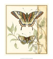Tandem Butterflies II Framed Print