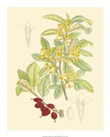 Berries & Blossoms IV Fine Art Print