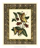 Leather Framed Butterflies I Framed Print
