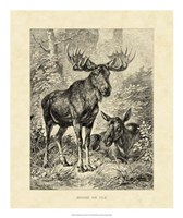 Vintage Moose or Elk Fine Art Print