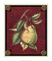 Poire D'Arenburg Fine Art Print