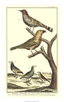 Bird Family II Fine Art Print