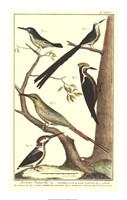 Bird Family III Fine Art Print