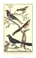 Bird Family IV Fine Art Print