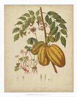 Botanicals V Fine Art Print