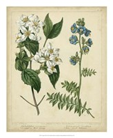 Cottage Florals I Fine Art Print