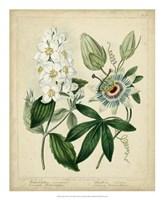 Cottage Florals II Fine Art Print