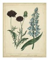 Cottage Florals VI Fine Art Print