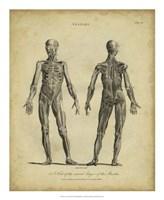 Anatomy Study III Fine Art Print