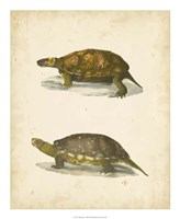 Turtle Duo I Fine Art Print
